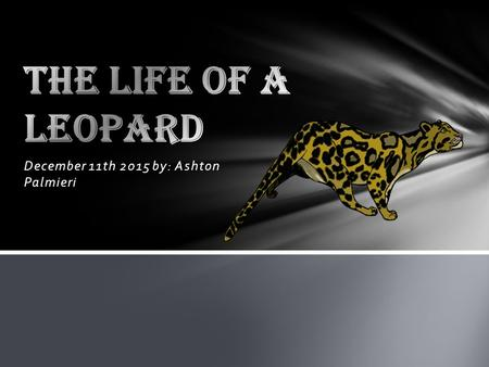 December 11th 2015 by: Ashton Palmieri. Leopard Research I've researched on the Leopard. The Leopard looks like a spotted cheetah. The leopard has black.