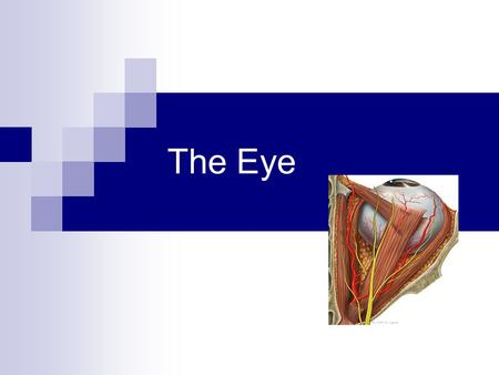 The Eye. Structure of the Eyeball Slightly irregular hollow sphere with anterior and posterior poles The wall is composed of three tunics- fibrous, vascular.