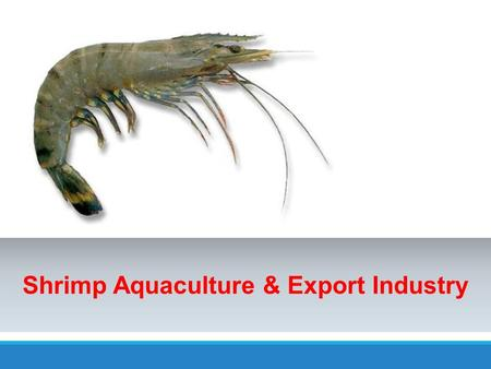 Shrimp Aquaculture & Export Industry. Average Farm Gate Shrimp Prices (Rs) for Exports YEARPRICES (RS) 2008455 2009553 2010604 2011649 2012712 2013754.