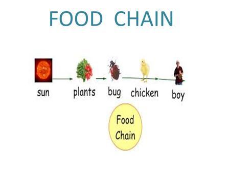 FOOD CHAIN. Producer A Producer provides things at the start of a food chain.