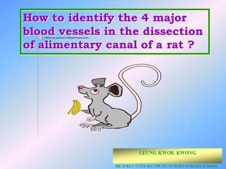 @ Copyright How to identify the 4 major blood vessels in the dissection of alimentary canal of a rat ? LEUNG KWOK KWONG HK & KLN CCPA MA CHUNG SUM SECONDARY.