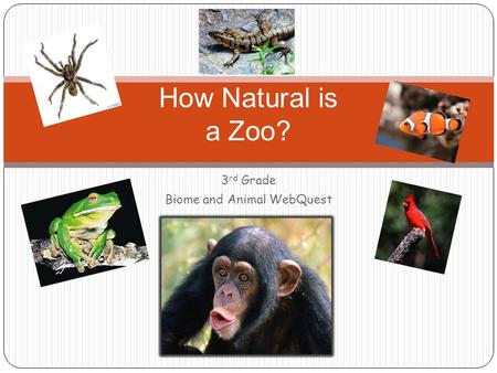 3 rd Grade Biome and Animal WebQuest How Natural is a Zoo?