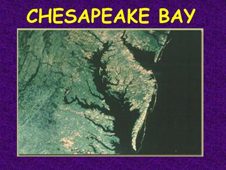CHESAPEAKE BAY. Chesapeake as an Estuary An estuary is: a semi-enclosed body of water that has a free connection with the seaa semi-enclosed body of water.