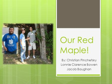 Our Red Maple! By: Christian Pinchefsky Lonnie Clarence Bowen Jacob Baughan.