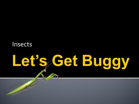 Insects. Insects are so neat to see, you can watch them every day. But, if you catch an insect be sure to set it free!