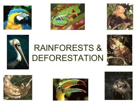 RAINFORESTS & DEFORESTATION. Africa's rainforests are disappearing.  Original forest areas2005.