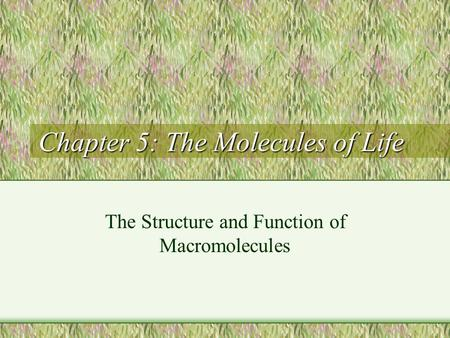 Chapter 5: The Molecules of Life The Structure and Function of Macromolecules.