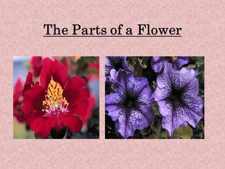 The Parts of a Flower. Why are There Flowers? There are flowers so that seeds can be made. The bright colored flowers and its scent act as a lure to small.