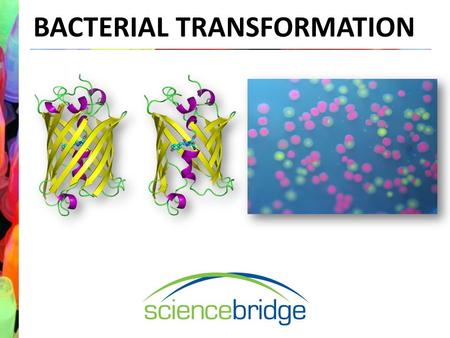BACTERIAL TRANSFORMATION. Laboratory Introduction What is a protocol?What is a model organism? Why do scientists use protocols? What are some examples.