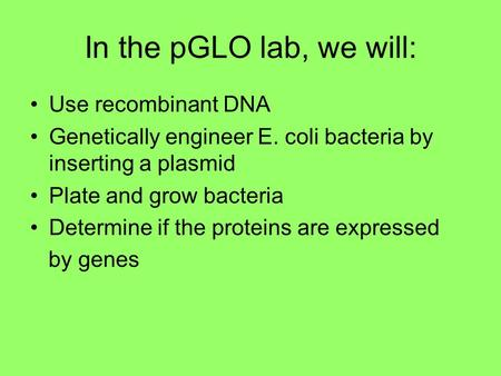 In the pGLO lab, we will: Use recombinant DNA Genetically engineer E. coli bacteria by inserting a plasmid Plate and grow bacteria Determine if the proteins.