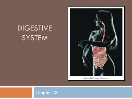 DIGESTIVE SYSTEM Chapter 23. Nutrition  Nutrient: substance in food used to promote growth, maintenance, and repair  Major nutrients:  Carbohydrates.