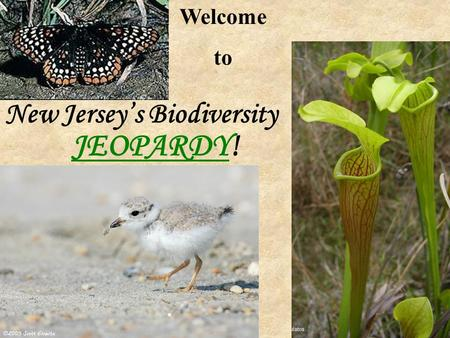 JEOPARDY! JEOPARDY Welcome to New Jersey's Biodiversity.
