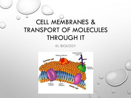 Cell Membranes & transport of molecules through it