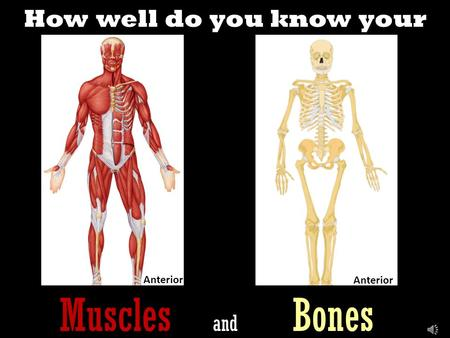 How well do you know your Muscles and Bones Anterior.