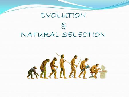 EVOLUTION & NATURAL SELECTION. Starter Natural selection recap Can you remember natural selection from AS? Outline the process of natural selection.