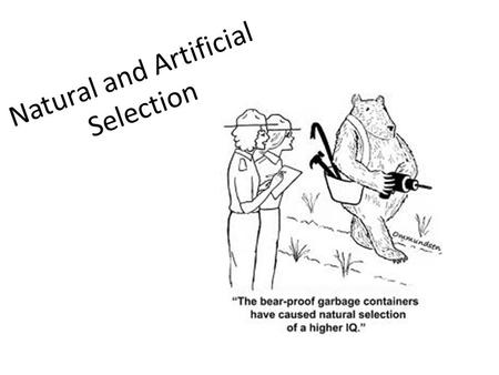 Natural and Artificial Selection. Learning Objectives Be able to explain the 4 factors in Natural Selection Be able to differentiate between Natural Selection.