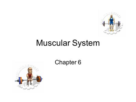 Muscular System Chapter 6. The 3 Muscle Types The job of all muscles is to contract They are all fibrous because cells are elongated The 3 Muscle.