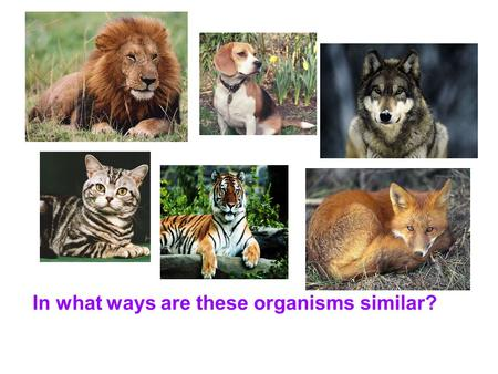 In what ways are these organisms similar?. How might these animals be placed into two different groups?