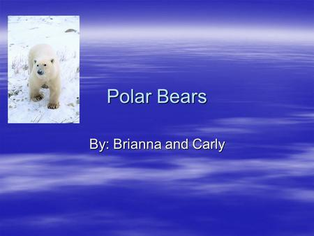 Polar Bears By: Brianna and Carly. Introduction Do you know what polar means? It means cold. Doesn't that mean polar bears have to be cold? No, it doesn't.