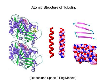 Atomic Structure of Tubulin.