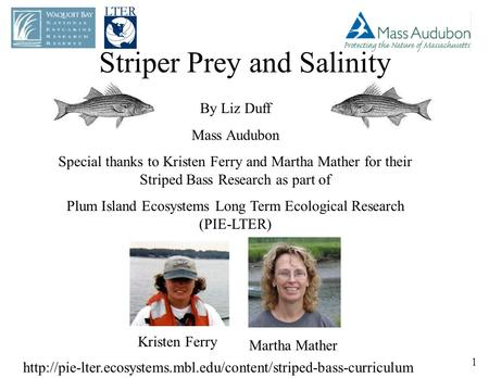 Striper Prey and Salinity By Liz Duff Mass Audubon Special thanks to Kristen Ferry and Martha Mather for their Striped Bass Research as part of Plum Island.