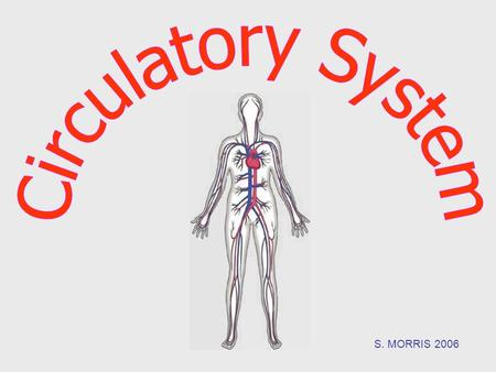 S. MORRIS 2006. What does the Circulatory System do? Function: The job of the circulatory system is to carry blood to and from different places in the.