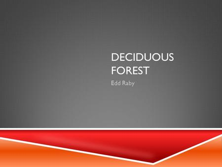 DECIDUOUS FOREST Edd Raby. WHAT IS A DECIDUOUS FOREST  Deciduous forests can be found in North America, Europe, Japan, and parts of South America, Russia,
