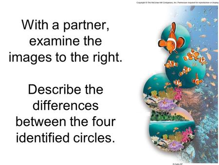 With a partner, examine the images to the right. Describe the differences between the four identified circles.
