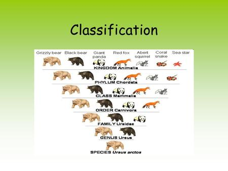 Classification. What is Classification? Grouping things according to similarities Taxonomy science of classifying living things Scientists classify organisms.