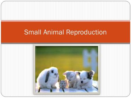 Small Animal Reproduction. What is reproduction? Sexual Reproduction is the union of egg and sperm to produce a new animal Two parents required  male.