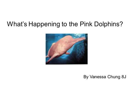 What's Happening to the Pink Dolphins? By Vanessa Chung 8J.