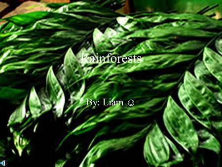 Rainforests By: Liam ☺.