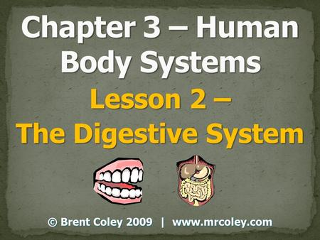Lesson 2 – The Digestive System © Brent Coley 2009 | www.mrcoley.com.