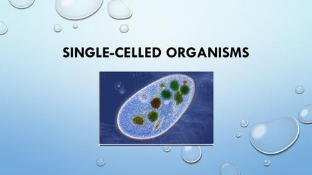 SINGLE-CELLED ORGANISMS. WHAT IS A SINGLE-CELLED ORGANISM? AN ORGANISM WHERE ALL THE LIFE PROCESSES ARE CARRIED OUT IN A SINGLE-CELL. BACTERIA ARE THE.