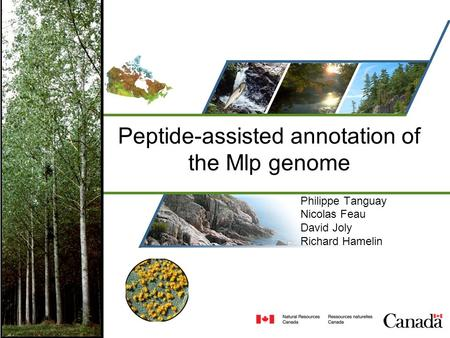 Peptide-assisted annotation of the Mlp genome Philippe Tanguay Nicolas Feau David Joly Richard Hamelin.