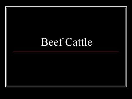 Beef Cattle. BEFORE THE 1960's… Approximately 20 different breeds were available in the United States. Today, there are over 70 breeds found in the United.
