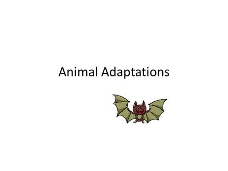Animal Adaptations. Types of Adaptation Anything that helps an organism survive in its environment is an adaptation. It also refers to the ability of.