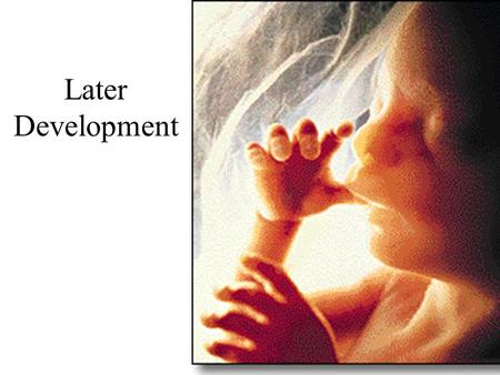 Later Development. at ~ 8 weeks > fetus human gestation 38 weeks (from conception)
