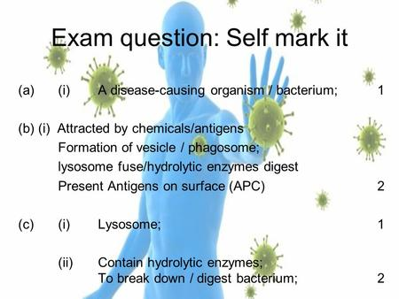 Exam question: Self mark it (a)(i)A disease-causing organism / bacterium;1 (b)(i) Attracted by chemicals/antigens Formation of vesicle / phagosome; lysosome.