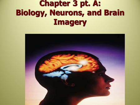 Chapter 3 pt. A: Biology, Neurons, and Brain Imagery.