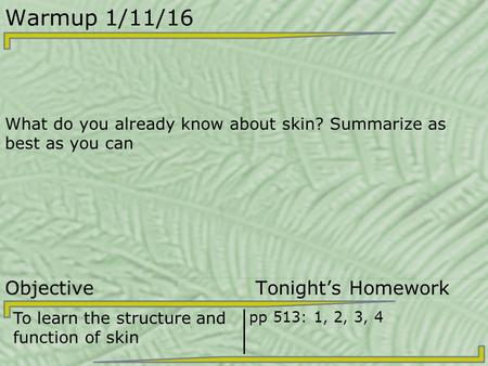 Warmup 1/11/16 What do you already know about skin? Summarize as best as you can Objective Tonight's Homework To learn the structure and function of skin.