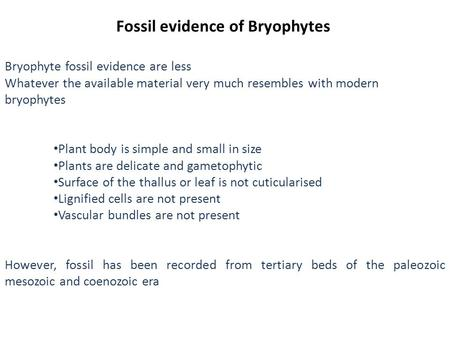 Fossil evidence of Bryophytes