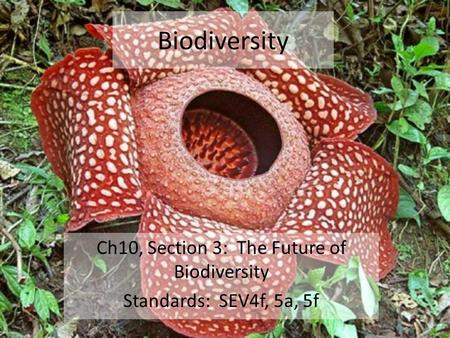 Biodiversity Ch10, Section 3: The Future of Biodiversity Standards: SEV4f, 5a, 5f.
