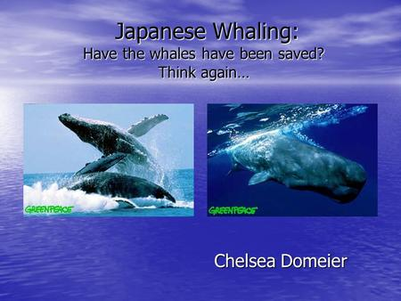 Japanese Whaling: Have the whales have been saved? Think again… Japanese Whaling: Have the whales have been saved? Think again… Chelsea Domeier.