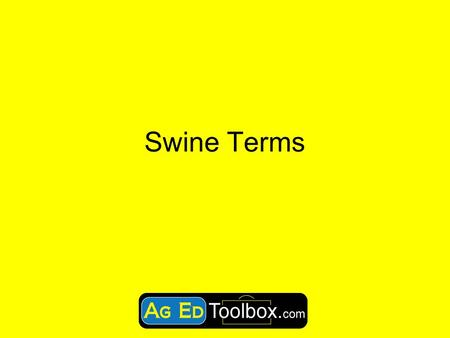 Swine Terms. Swine Facts  Swine were among the first of all animals to be domesticated, around 6,000 years ago.  Insulin and about 40 other medicines.