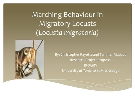 Marching Behaviour in Migratory Locusts (Locusta migratoria) By: Christopher Payette and Tammer Masoud Research Project Proposal BIO318Y University of.
