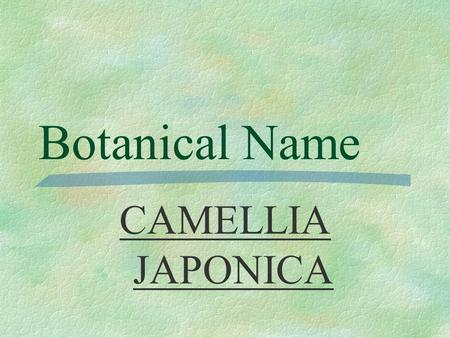 Botanical Name CAMELLIA JAPONICA PRONUNCIATION  ka - MEAL- yah jah - PON - ih- kah.