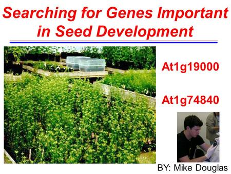Searching for Genes Important in Seed Development At1g19000 At1g74840 BY: Mike Douglas.
