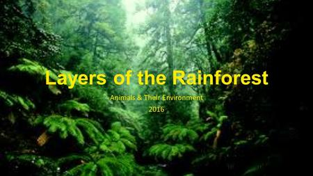 Layers of the Rainforest Animals & Their Environment 2016.