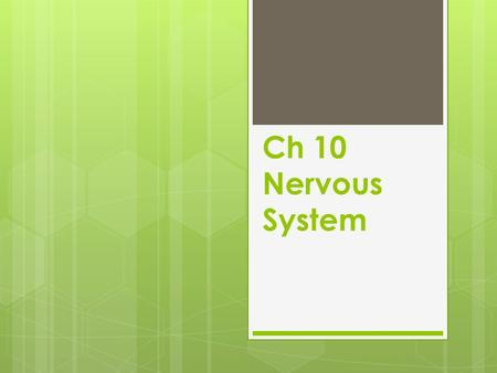 Ch 10 Nervous System. Terms  Brain- encephal/o- coordinates all activities of the body and receives and transmits messages throughout the body.  Spinal.